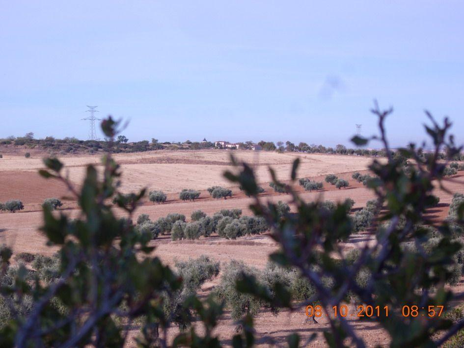 El Pingarrón al fondo, visto entre olivares